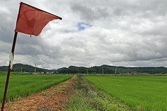 Rural Landscape with a Flag (Johnnie Shene Photography(Thanks, 1Million+ Views)) Tags: rural country countryside farm farmland local region paju landscape scenic scenery wideangle flag redflag longdistance nature natural grainfield field ricefield cerealfield tranquility tranquil scene nopeople selectivefocus adjustment clouds cloudscape photography horizontal outdoor colourimage fragility freshness daylight summer southkorea interesting awe wonder travel destination attraction landmark canon eos600d rebelt3i kissx5 sigma 1770mm f284 dc macro lens       shene81