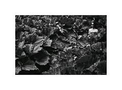 paradise (Marek Pupk) Tags: portrait blackandwhite bw woman film nature monochrome beauty analog canon europe paradise central documentary poetic slovakia burdock