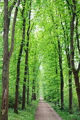 IMG_4472 (Irina Souiki) Tags: parcdesceaux france paris sceaux flowers nature parc park