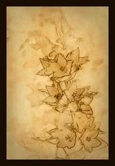 Lysimachia vulgaris (patrick.verstappen) Tags: lysimachia vulgaris wederik plant flower texture textured ipernity ipiccy inspiration photo picassa pinterest pat picmonkey nikon belgium flickr facebook gingelom google d7100 sigma summer