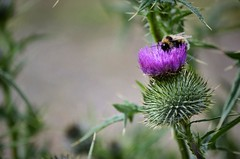 Bee (oscartothekeys) Tags: life trip flowers winter flower color macro love nature animals nikon scenery flikr
