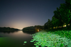 Creepy alligator (mac_prv) Tags: park longexposure trees sky lake water animal night stars texas state huntsville alligator estrellas lagarto lillypads singleexposure