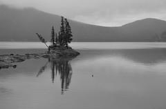 Silver (Mushi Kid) Tags: park morning trees blackandwhite bw lake canada mountains reflection landscape gray national alberta banff monochomatic minnewanka