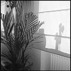 shadows (manni39) Tags: stilllife 120 6x6 film rolleiflex mediumformat square stillleben fuji shadows schatten planar ombres acros rollfilm 6006 mittelformat fujiacros100 moyenformat r09 selfdevelopped rolleiflex6006 planar80mm28