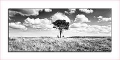 Lone Tree 08/09/2013 (0Hammer64) Tags: sky blackandwhite bw tree field clouds nikon whitby northeast northyorkshire d800 yabbadabbadoo 0hammer64