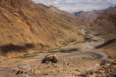 Accident of an oil tanker (coloured glass) Tags: crash accident trucks ladakh