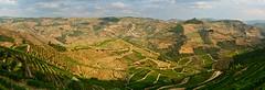 Douro Wineyard Terraces