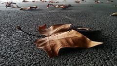 voy a caminar despacio ... (Color-de-la-vida) Tags: hojas forum otoño alquitrán siii