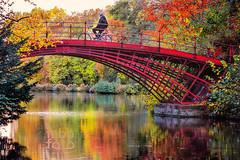 the red bridge in autumn (fabbfoto) Tags: bridge autumn red lake man berlin bike watching idyll mirrow
