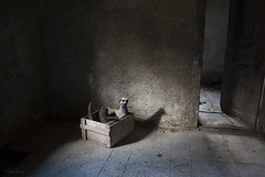 (moggierocket) Tags: door wood old light shadow mill abandoned animal metal meerkat floor box interior bare room chiaroscuro