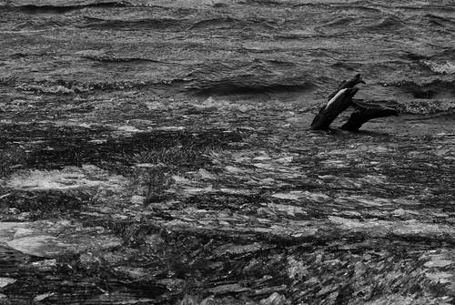 Černé jezero #Flickr12Days