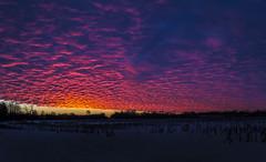 morning light show (olsonj) Tags: field sunrise