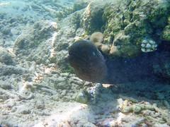 murne (pontfire) Tags: ocean blue sunset sea mer fish pez nature water animal coral landscape asian