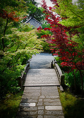 Forest Bridge (Jaredm2525) Tags: travel bridge trees color nature japan river outdoors kyoto foreign kyotoprefecture 2013