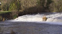 hopeful heron (Wendy:) Tags: heron river 350d january kitlens highwater weir dodder spate