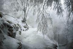 Nieve en Basaburua (arbioi) Tags: snow nieve euskalherria navarra nafarroa gr12 ireber basaburua arrarats zuparrobi