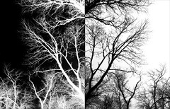 2-13-14 (CareBearQuelly) Tags: trees blackandwhite diptych branches project365 365days 365project day44 3652014 365the2014edition 13022014 {vision}:{outdoor}=0929 {vision}:{mountain}=0658