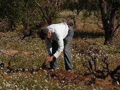 El campesino (calafellvalo) Tags: flores rboles labrador via calafell peasant cultivo campesino hierbas pags payes cavar plantar calafellvalo azada ardet {vision}:{outdoor}=0964 {vision}:{mountain}=0537 bartomer