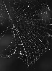 Spider's web (matteo.curti) Tags: us web go like away yay plz yee