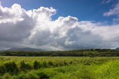 Tiny Horses (Dreshad Williams) Tags: green field grass clouds hawaii kauai