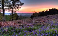Ashdown Forest, Broadstone, Dawn Chorus, May 2014 - 6D4793 (ElizFlickr) Tags: mist forest sunrise landscape sussex high wildlife heath bluebell heathland ashdownfo