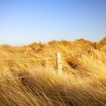 East Head Grass and Fence