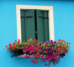 BURANO is great colors (dotrasmus) Tags: travel flowers summer italy colors burano veneto canoneos600d
