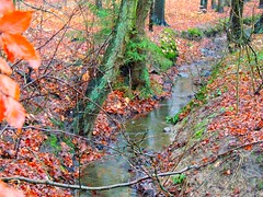 Bach im Rlauer Forst (Sophia-Fatima) Tags: deutschland bach brook schleswigholstein sachsenwald rlauerforstinschwarzenbek