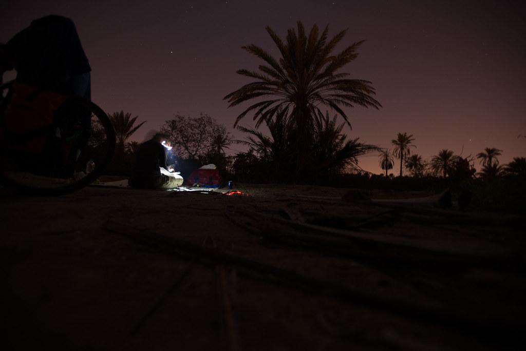 Palm tree camping