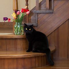 3  - 3 years! (Annabelle Danchee) Tags: birthday new portrait pet art beautiful cat blackcat artist day annabelle live creative   danchee annabelledanchee mrplush misterplush dancheeannabelle