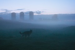Dexter in Haar 1 (Glesgaloon) Tags: dog mist fog aberdeen germanshepherd alsation haar aberdeenbeach