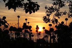 Un saluto di fuoco! (Anfora di Cristallo) Tags: sun nuvola sole sera sfere cipolla
