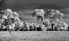 Alone (Neal3K) Tags: trees bw horse nature clouds rural ir blackwhite alone pasture infraredcamera kolarivisionmodifiedcamera