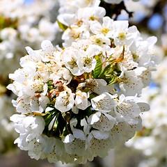 Soria_0026 (Joanbrebo) Tags: flowers flores fleur blossom blumen fiori soria flors autofocus castillaylen lunaphoto efs18135mmf3556is canoneos70d