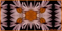 *Summer...dream!* (MONKEY50) Tags: summer orange white plant abstract flower macro art colors digital psp petals kaleidoscope daisy soe natures hypothetical musictomyeyes mandalas autofocus artdigital shockofthenew flickraward awardtree pentaxart contactgroups netartii pentaxflickraward