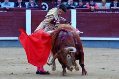 Alejandro Talavante, Feria de San Isidro (Fotomondeo) Tags: madrid espaa spain bull bullfighter bullfight toro bullring matador torero sanisidro plazadetoros corridadetoros lasventas alejandrotalavante