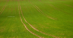 Tracks on sprouting field [I] (Modesto Vega) Tags: tree green texture field grass landscape spring nikon track outdoor farm surrey blades earlyspring d600 theweald grasssprout surreyfield