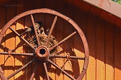 Nest (ChemiQ81) Tags: bird wheel wooden nest outdoor poland polska polish chick polen polonia pologne 2016 nestling ptaki  polsko  gniazdo puola plland lenkija pollando pisklta   poola poljska polija pholainn     chemiq polanya lengyelorszgban