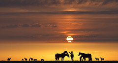 One of my favorite topics... (Jan Wedema) Tags: sunset horses photographer pentax jan fotograaf panagor 135mmf25 jeeeweee janwedema wedema 135mm25primelens