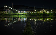 1081 (Keiichi T) Tags: light shadow reflection green water station japan night train canon eos  ricefield      6d