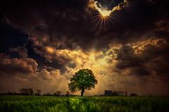 tree under sun (radonracer) Tags: trees sunlight tree clouds baum niederrhein kapellen boeckelt