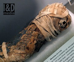 cmd2 (Internet & Digital) Tags: mummy mummified cats ibis victorian mummifiedcats thoth hawk sacrifice ritual ancient ancientegypt offerings god isis horus osirus egypt giftstothegods exhibition glasgow kelvingrovemuseum animalmummycatmummygiftstothegodsexhibitionglasgowkelvingrovemuseummummifiedcatsancientegyptegyptcroccodilecatheadibisvictoriansacrificeritualancientofferingsgodc21troyidmedia