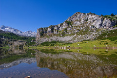 Covadonga - Lago de la Ercina (damargo1983) Tags: light color reflection verde luz water colors landscape lago landscapes agua colours asturias paisaje colores montaa reflejos montaas waterscape picosdeeuropa covadonga cangasdeons lagosdecovadonga parquenatural lagodelaercina lagoglaciar laercina