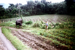 32-122 (ndpa / s. lundeen, archivist) Tags: winter boy people color fall film field animal rural 35mm countryside village child nick taiwan ox 1970s 1972 hualien 32 taiwanese eastcoast dewolf rurallife aboardatrain travelingbytrain republicofchina onatrain easterncoast viewfromatrain easterntaiwan nickdewolf photographbynickdewolf hualiencounty ridingonatrain reel32 viewfromapassingtrain takenfromaboardapassingtrain