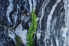 Lines (Hugo von Schreck) Tags: macro lines stone crystals outdoor makro farn abstrakt linien textur kristalle tamronspaf2875mmf28xrdildasphericalifmacro canoneos5dsr hugovonschreck