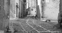 Erice (Lord Seth) Tags: 2015 d5000 erice lordseth sicilia bw biancoenero borgo cani italy medievale nikon vicoli