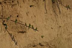 Zambia_  20162016-05-0215-42-41 (C_Baltrusch) Tags: christian safari afrika zambia beeeater sambesi selfdrive sambia zambeziriver baltrusch