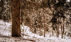 Combloux, lomography, 15 (Patrick.Raymond (2M views)) Tags: alpes haute savoie combloux lomography xpro nikon montagne neige