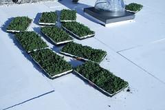 LiveRoof Lite modules at Korematsu Middle School (LiveRoof) Tags: california plants sustainability greenroof portolavalley livingroof plantedroof liveroof korematsumiddleschool florasource