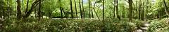 20160527 Kamikochi 5 (BONGURI) Tags: trees tree green forest trekking nikon df hiking walker jp  hiker matsumoto nagano  kamikochi   trekker             afsnikkor2485mmf3545gedvr